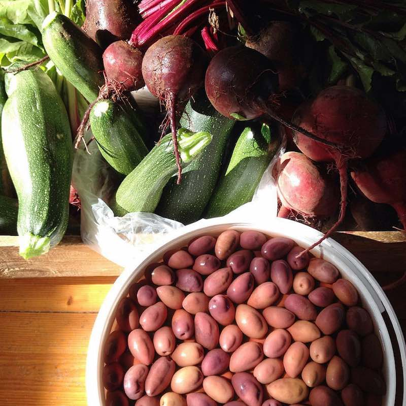 summer vegies and olives