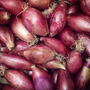 Florence Onions
